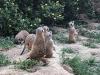 ilizlet_14-6-2020_zoo_maksimir_12